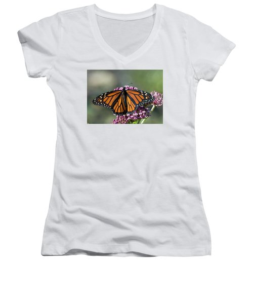 Monarch Butterfly Women's V-Neck T-Shirt (Junior Cut) by Stephen Flint