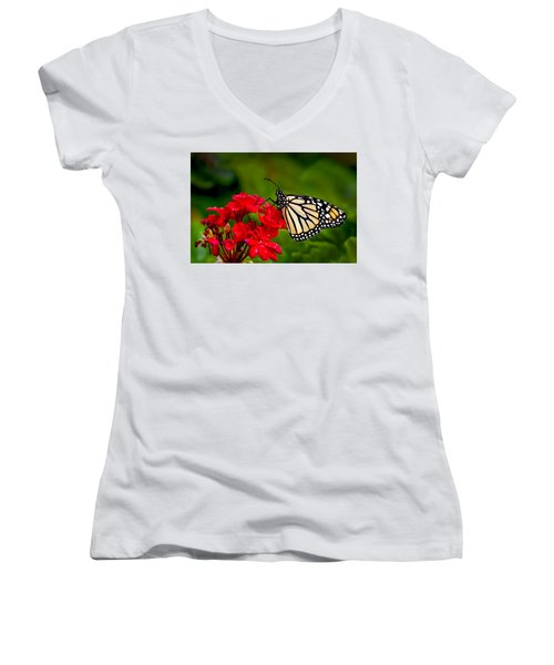 Monarh Butterfly Women's V-Neck