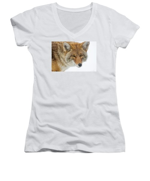 Mr. Coyote Women's V-Neck (Athletic Fit)