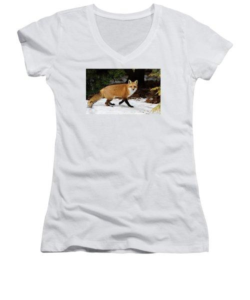 Women's V-Neck T-Shirt (Junior Cut) featuring the photograph Mr Fox by Mircea Costina Photography