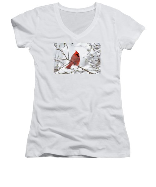 Northern Cardinal - D001540 Women's V-Neck (Athletic Fit)