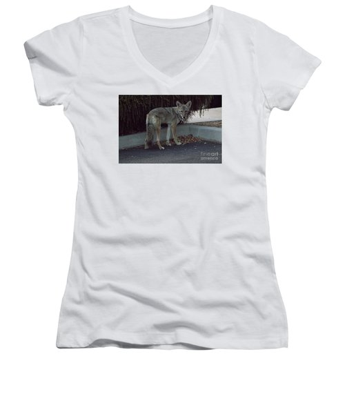 Women's V-Neck T-Shirt (Junior Cut) featuring the photograph On The Prowl 1 by Anne Rodkin