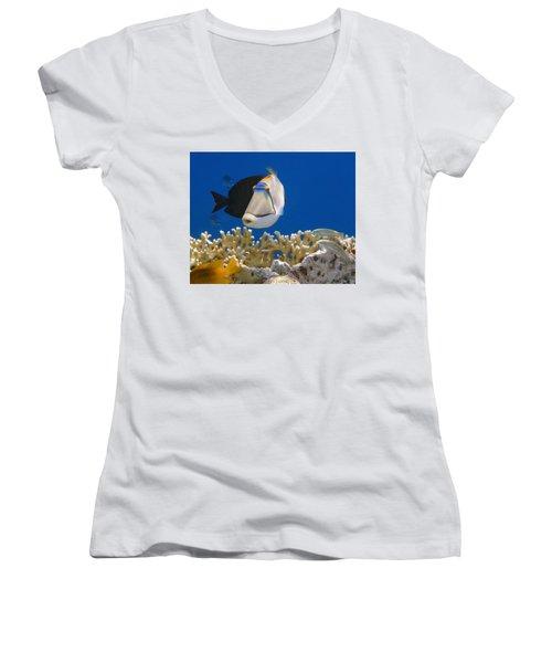 Picasso Fish And Klunzingerwrasse Women's V-Neck