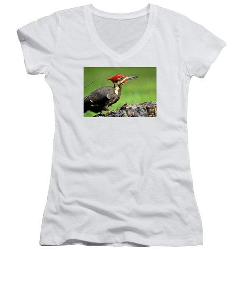 Pileated 2 Women's V-Neck T-Shirt (Junior Cut) by Douglas Stucky