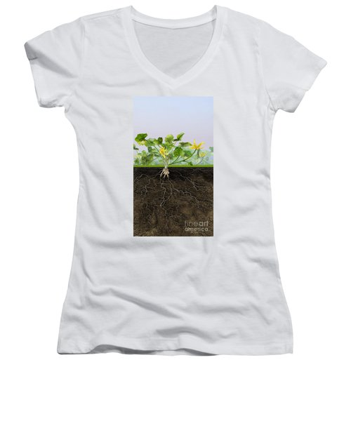 Pilewort Or Lesser Celandine Ranunculus Ficaria - Root System -  Women's V-Neck