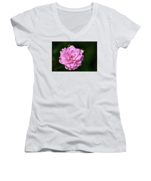 Pink Rose Petals Women's V-Neck (Athletic Fit)