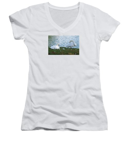 Preening Swans Women's V-Neck T-Shirt (Junior Cut) by Cathy Donohoue