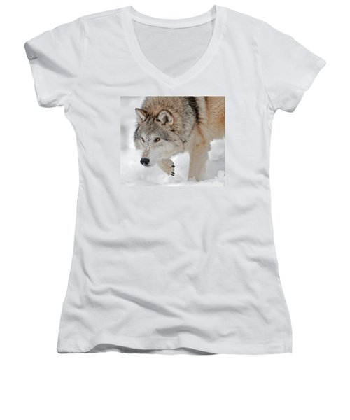Women's V-Neck featuring the photograph Prowling Wolf by Scott Read