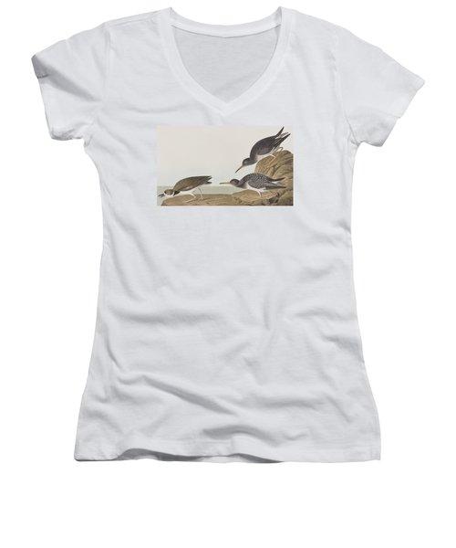 Purple Sandpiper Women's V-Neck T-Shirt (Junior Cut) by John James Audubon