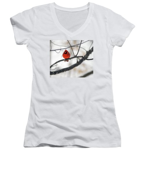 Women's V-Neck T-Shirt (Junior Cut) featuring the photograph Red Cardinal In Snow by Marie Hicks