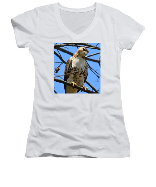 Red-tailed Hawk Women's V-Neck (Athletic Fit)