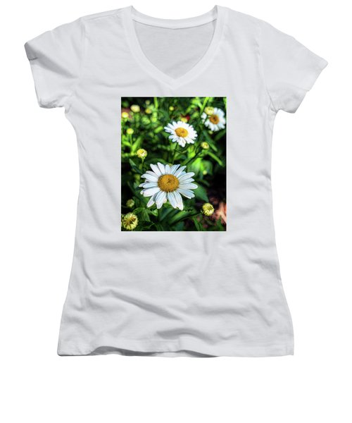 Shasta Daisy Women's V-Neck T-Shirt (Junior Cut) by Robert FERD Frank
