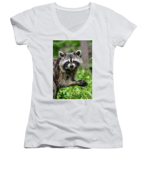Smiling Raccoon Women's V-Neck T-Shirt (Junior Cut)