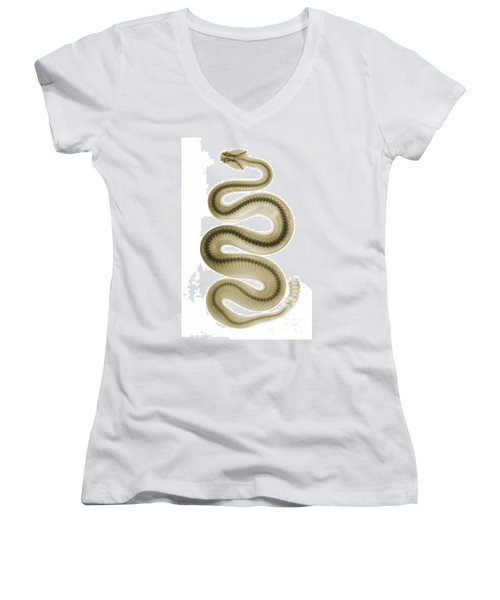Southern Pacific Rattlesnake, X-ray Women's V-Neck T-Shirt