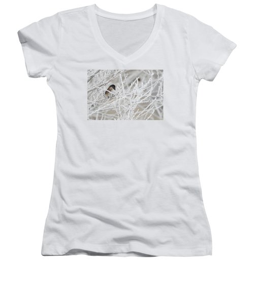 Spotted Towhee In Winter Women's V-Neck