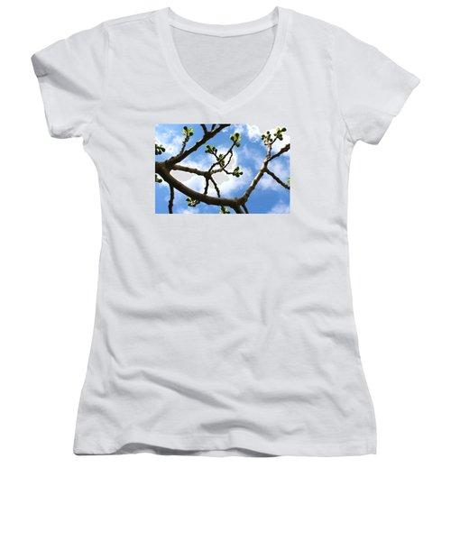Fig Tree In Spring Women's V-Neck T-Shirt