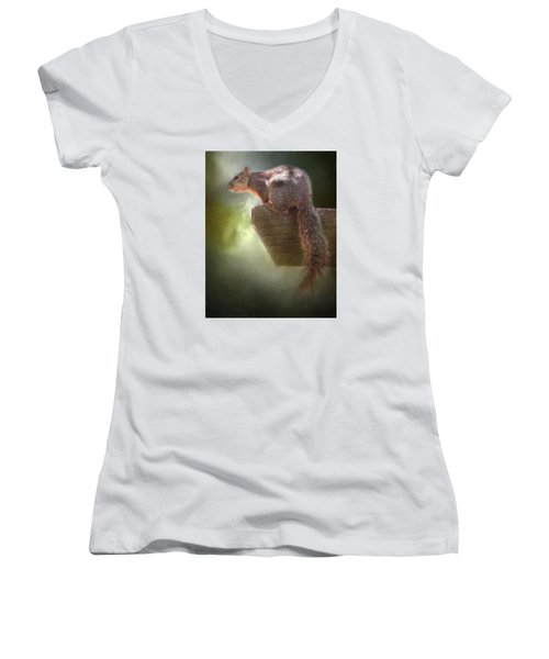 Squirrel Women's V-Neck T-Shirt (Junior Cut) by David and Carol Kelly