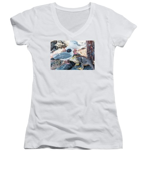 Swallow Tailed Gull And Iguana On  Galapagos Islands Women's V-Neck T-Shirt (Junior Cut) by Marek Poplawski