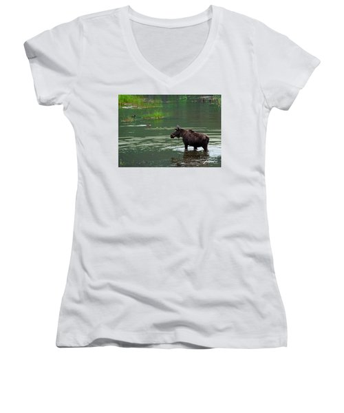 young Moose in spring pond Women's V-Neck T-Shirt