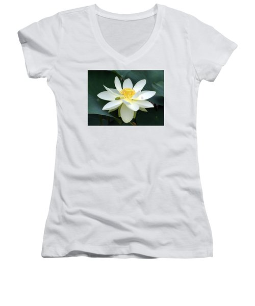 Women's V-Neck T-Shirt (Junior Cut) featuring the photograph The Lotus Flower The Frog And The Bee by Gary Crockett