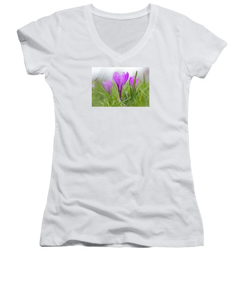 Three Glorious Spring Crocuses Women's V-Neck (Athletic Fit)