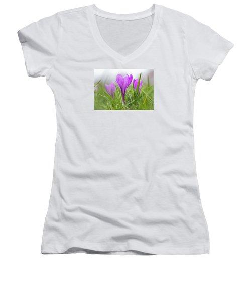 Three Glorious Spring Crocuses Women's V-Neck