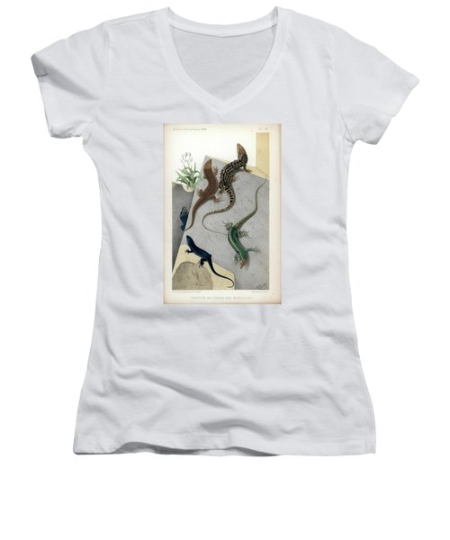 Women's V-Neck T-Shirt (Junior Cut) featuring the drawing Varieties Of Wall Lizard by Jacques von Bedriaga