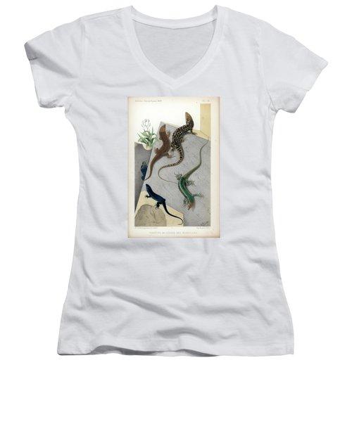 Varieties Of Wall Lizard Women's V-Neck T-Shirt