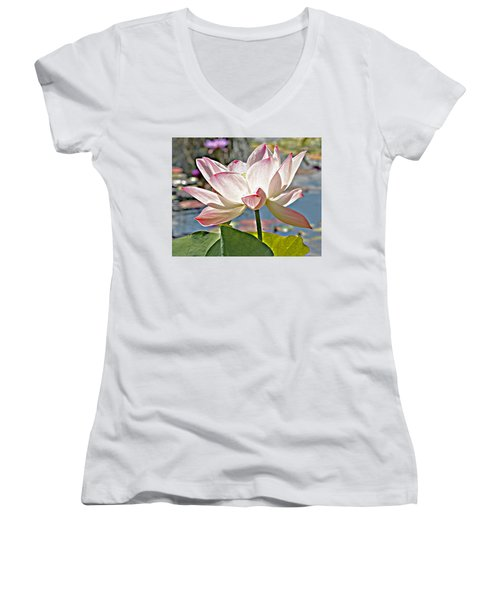 Water Lily Women's V-Neck T-Shirt (Junior Cut) by Catherine Alfidi