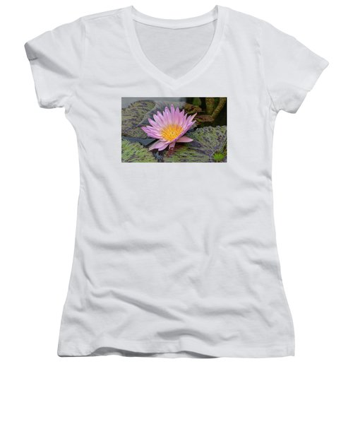 Waterlily Women's V-Neck