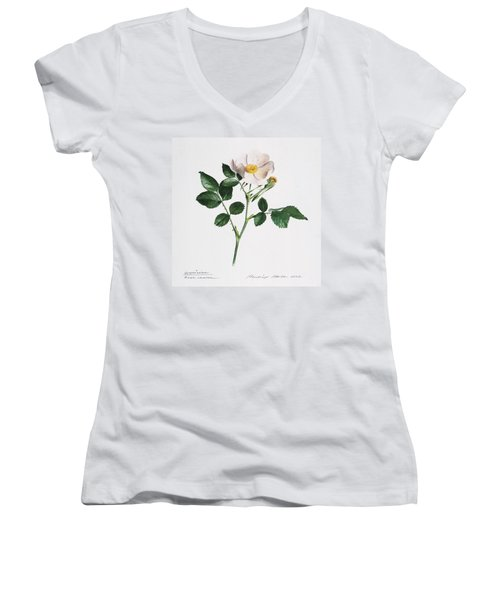 Wild Rose Women's V-Neck