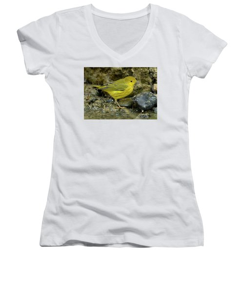 Yellow Warbler Women's V-Neck T-Shirt (Junior Cut) by Doug Herr