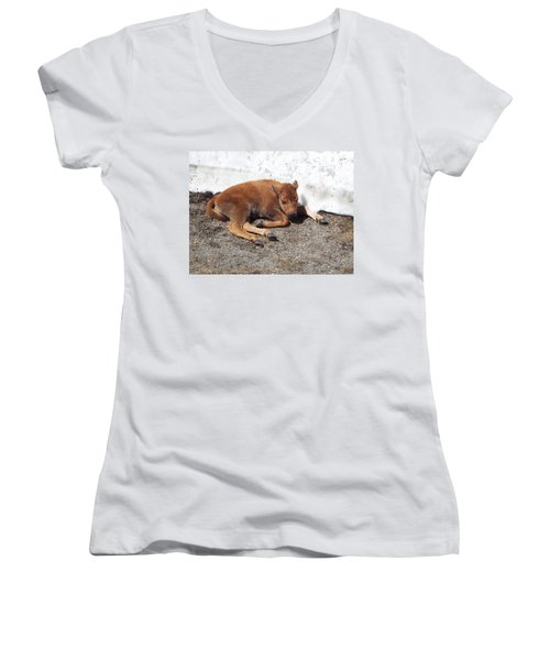 Yellowstone Bison Calf  Women's V-Neck T-Shirt