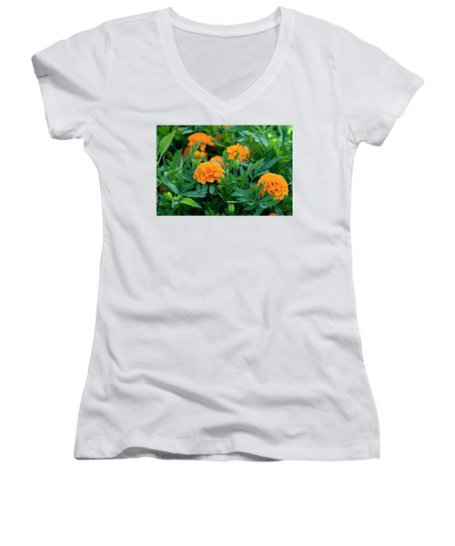 Marigolds Women's V-Neck