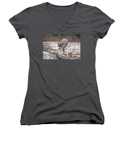 Women's V-Neck T-Shirt (Junior Cut) featuring the photograph Adult Timber Wolf by Wolves Only