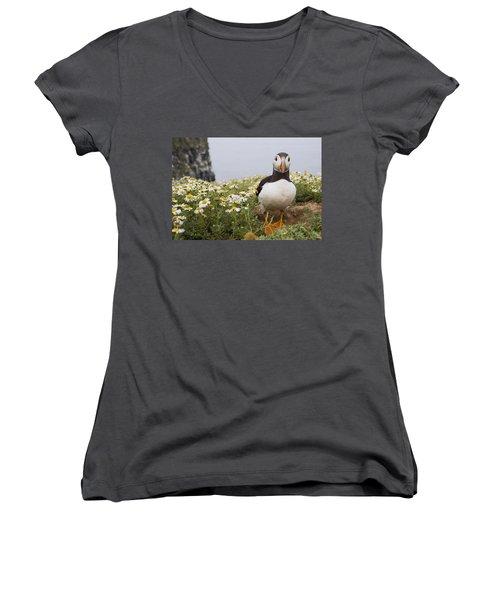 Atlantic Puffin In Breeding Plumage Women's V-Neck T-Shirt (Junior Cut) by Sebastian Kennerknecht