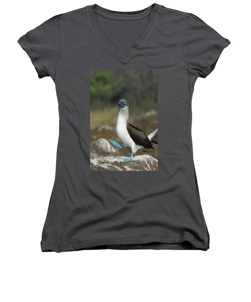 Blue-footed Booby Courtship Dance Women's V-Neck T-Shirt (Junior Cut) by Tui De Roy