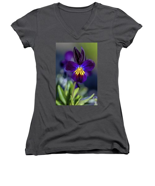 Purple Viola Women's V-Neck