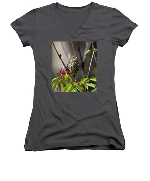 Fox Sparrow Women's V-Neck (Athletic Fit)