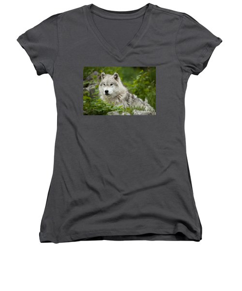Arctic Wolf Women's V-Neck