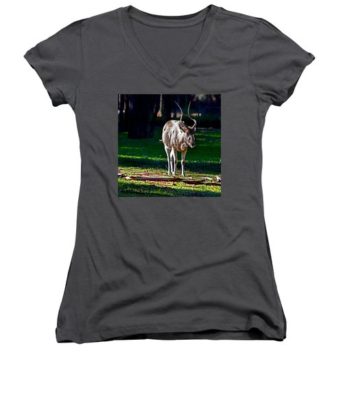 Addax Women's V-Neck T-Shirt