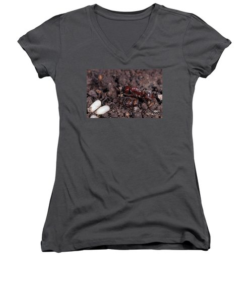Ant Queen Fight Women's V-Neck T-Shirt (Junior Cut) by Gregory G. Dimijian, M.D.