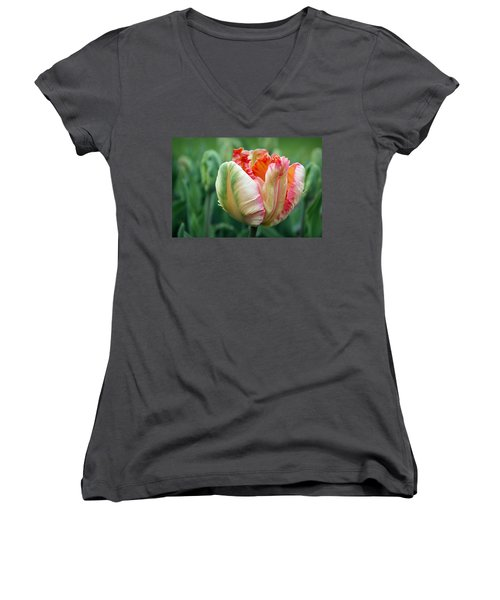 Apricot Parrot Tulip Women's V-Neck (Athletic Fit)
