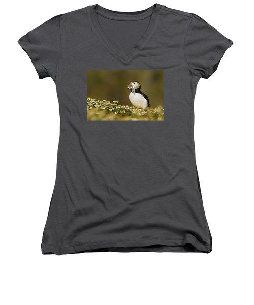 Atlantic Puffin Carrying Fish Skomer Women's V-Neck T-Shirt (Junior Cut) by Sebastian Kennerknecht