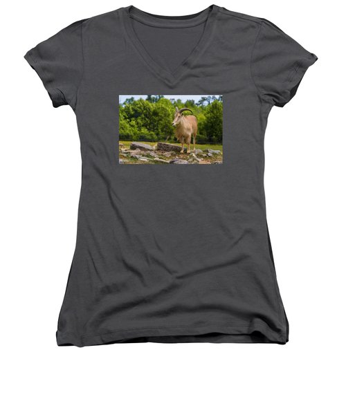 Barbary Sheep Women's V-Neck