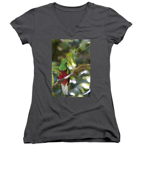 Beautiful Quetzal 1 Women's V-Neck