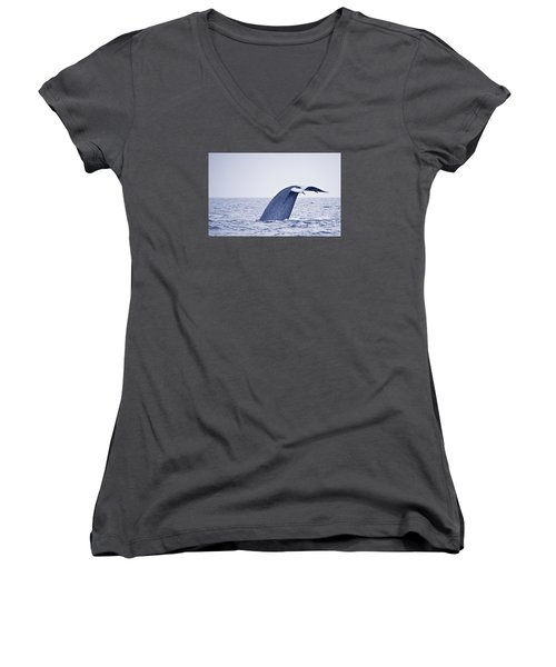 Blue Whale Tail Fluke With Remoras Women's V-Neck T-Shirt (Junior Cut) by Liz Leyden