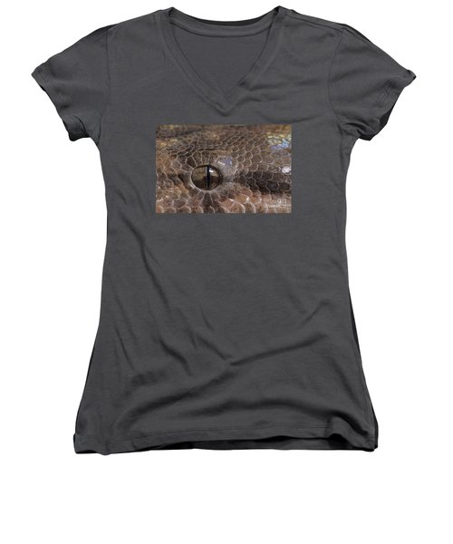 Boa Constrictor Women's V-Neck T-Shirt (Junior Cut) by Chris Mattison FLPA