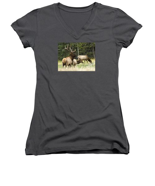 Bull Elk With His Harem Women's V-Neck T-Shirt (Junior Cut) by Bob Christopher