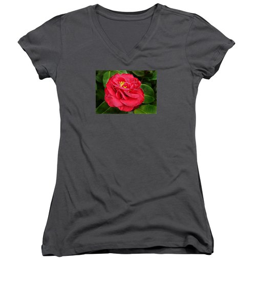 Camellia Japonica ' Dixie Knight ' Women's V-Neck T-Shirt (Junior Cut) by William Tanneberger